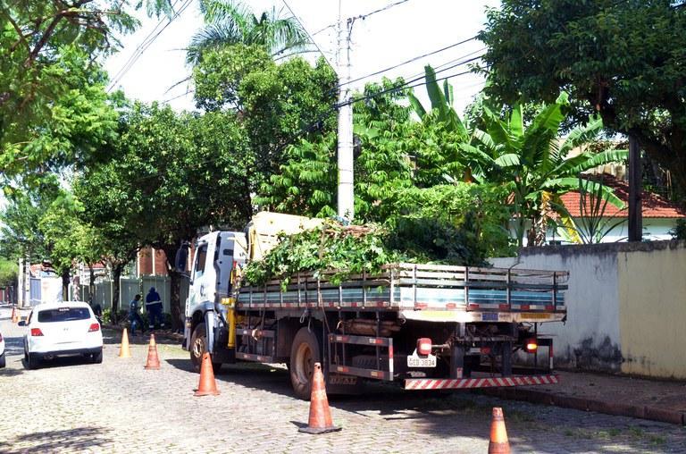 Será realizado poda de árvore na Rua Zero nesta quarta (24)