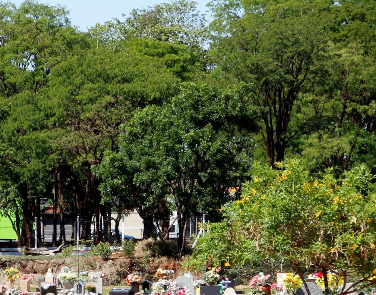 Realizada manutenção da arborização urbana no Cemitério das Cruzes